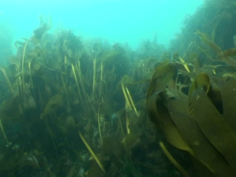 underwater  scene with seaweed and fish