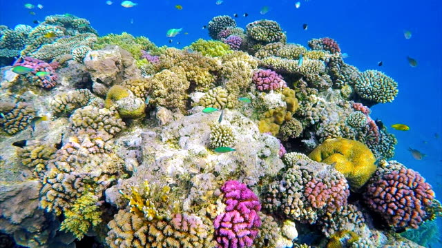 Underwater sea life coral reef on Red Sea
