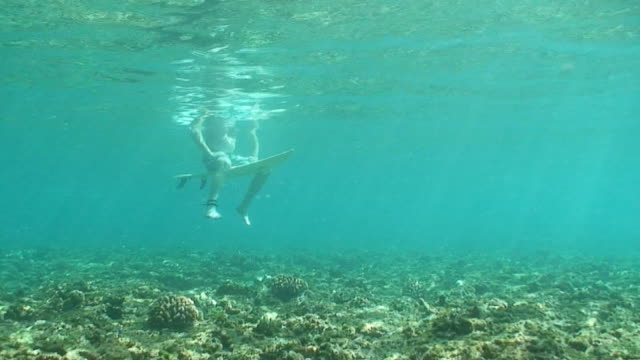 Underwater Surfing Surfer Hawaii Maui Waikiki Honolulu Oahu