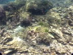 MS underwater view of damaged coral, from 2004 tsunami, Similan islands, Thailand