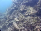 MS underwater view showing coral damage from 2004 tsunami, Thailand