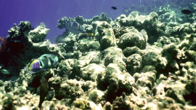 Underwater world on Maldives