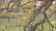 Unidentifiable male African rowing canoe on swamp grass all around trees FG BG Wetland marsh marshland