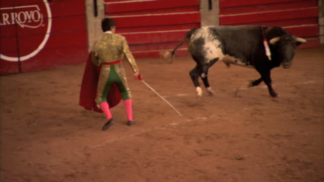 Unidentifiable male matador w/ muleta red cloth baiting bull to charge in bullring arena Tauromachy torero tradition estocada animal rights Mexico...