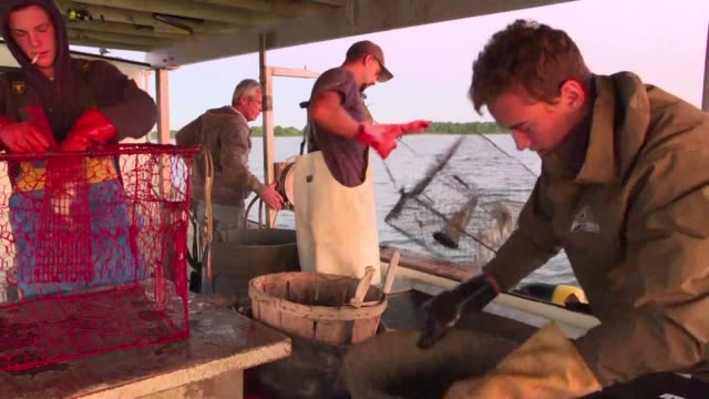 A unique multi million dollar industry crab fishing is both a tradition and a key part of the local economy in the coastal state of Maryland