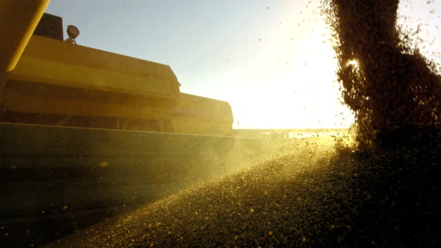 Entladen Weizen-Grain-Leder
