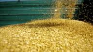 Entladen Weizen-Grain-(Super Zeitlupe)
