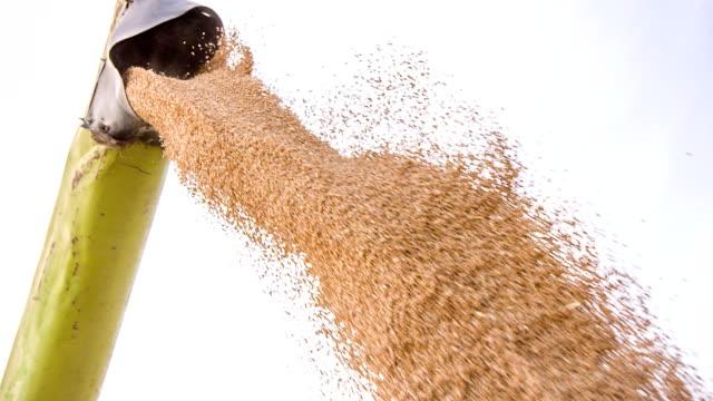 SLO MO Unloading Wheat Grain