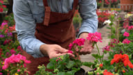 Unrecognisable man checking flower plants at a garden center