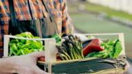 SLO MO unkenntlich Bauer hält eine Kiste voll mit Gemüse