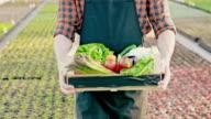 SLO MO unkenntlich Bauer mit Kiste voll mit Gemüse