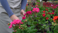 Unrecognizable woman checking plants at a garden center