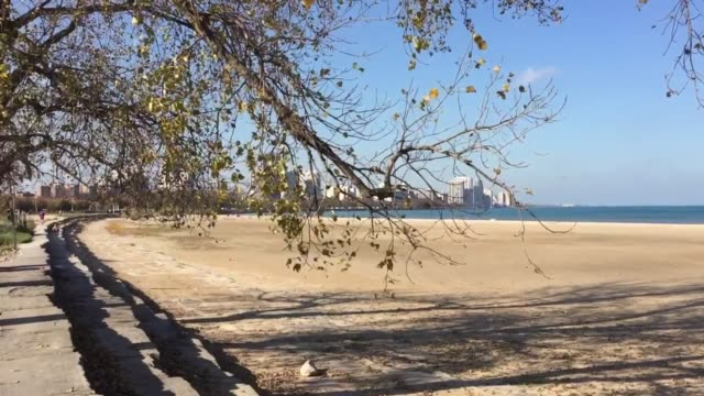 Unseasonably warm November temperatures have dog owners out at Chicago's dog beach on Lake Michigan Additional shots show the view from Montrose...