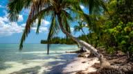 Untouched Tropical Beach in Cuba