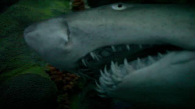 Hautnah Shark