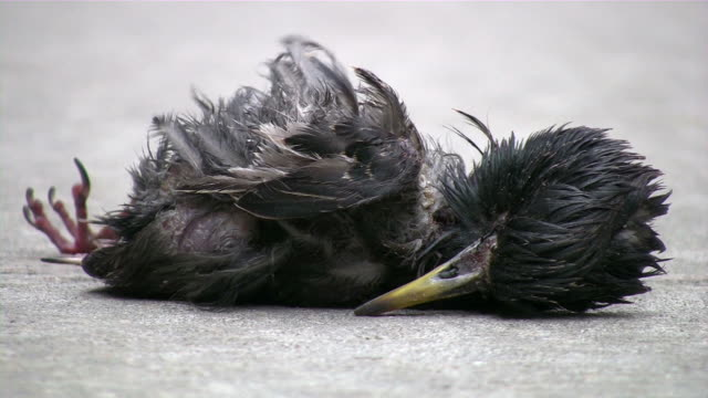 Urban life & death. Dead bird.