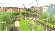 WGN Urban rooftop garden with buildings in background at Uncommon Ground restaurant on Aug 25 2014 in Chicago