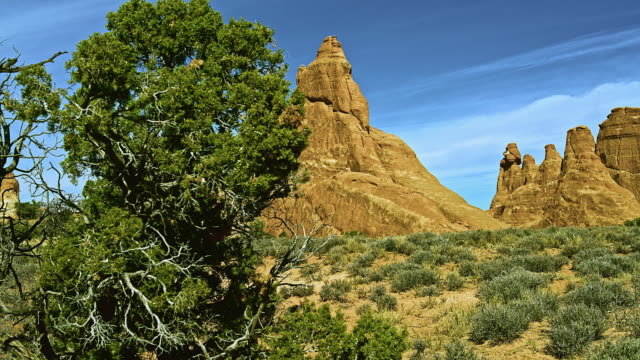 Utah juniper tree in front of the Sandstone fins. Red rock formation in Devils Garden, Utah, USA. XXXL stitched panorama.