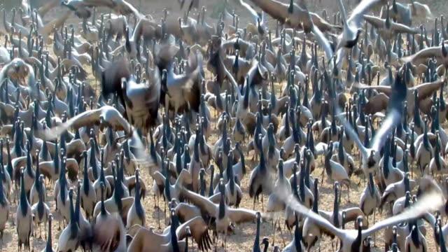 Valley of Cranes
