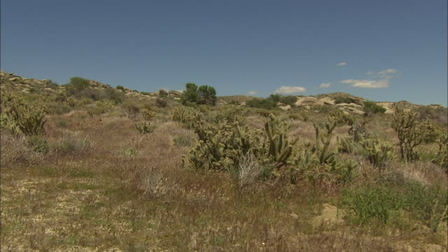 A variety of cacti and grasses thrive in a California desert.