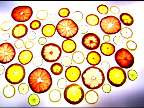 Variety of citrus