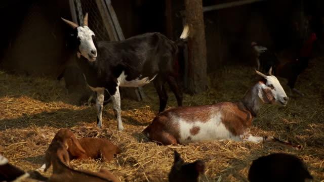 Vielfalt von Nutztieren