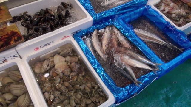 Variety of fresh seafood, clams, sardines sold at Tsukiji Market