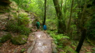 Various shots of bushwalking tracks in the Blue Mountains National Park including some with anon walkers tracks with steps and lush green rainforest...