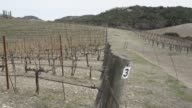 Various shots of the drought impact in the winemaking region of Paso Robles California on February 18 Wide shots of arid vineyards Panning wide shots...