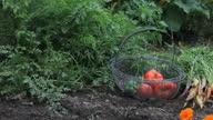 CU PAN Vegetable garden, Richmond, Virginia, USA