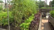 Vegetable rooftop garden at Uncommon Ground restaurant on Aug 25 2014 in Chicago