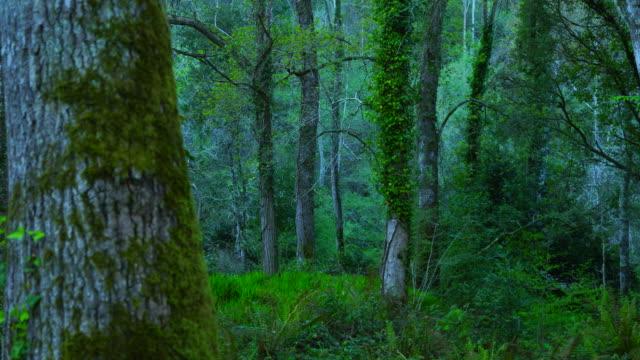 Vegetation along the riverbank, Senda Fluvial del Nansa, Nansa Valley, Cantabria, Spain, Europe