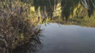 Vegetation grows on side of Utah riverbed