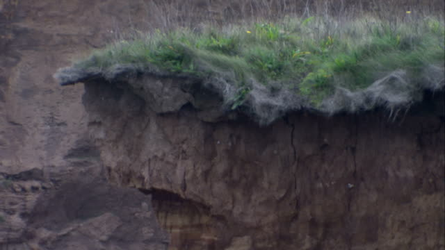 Vegetation hangs from the edge of an eroded coastal cliff. Available in HD.