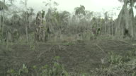 Vegetation severely damaged by heavy volcanic ash fall from Merapi volcano; Indonesia. 7 November 2010 / AUDIO