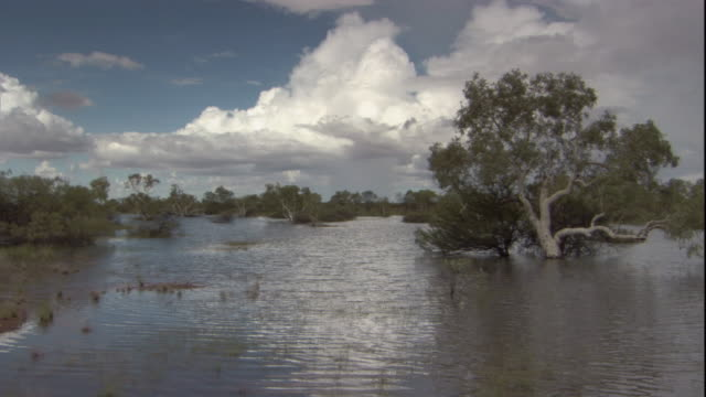 Vegetation submerged in flood water, New South Wales. Available in HD.