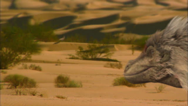 CGI, CU, R/F, Velociraptor  looking at other dinosaur in distance