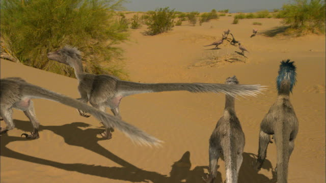 CGI, MS, HA, Velociraptors on sand dune