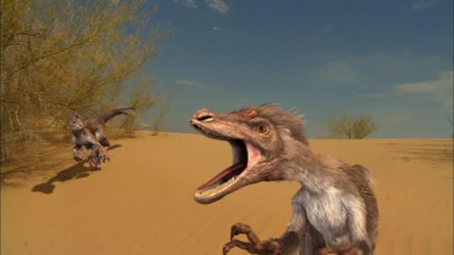 CGI, MS, PAN, Velociraptorses attacking Protoceratopses on sand dune