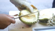 Kreditor Peeling Durian