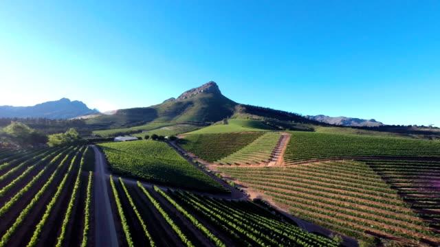 Verdant vineyards