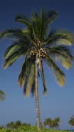 Vertical Video of Coconut Palm Tree against Sky