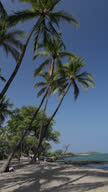 Vertical Video of Coconut Palms over Beach and Water