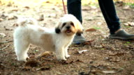 Very big very shaggy faithful kind service dog