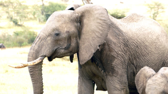 Pericoloso condizioni di natura con Elefante Madre e figlio