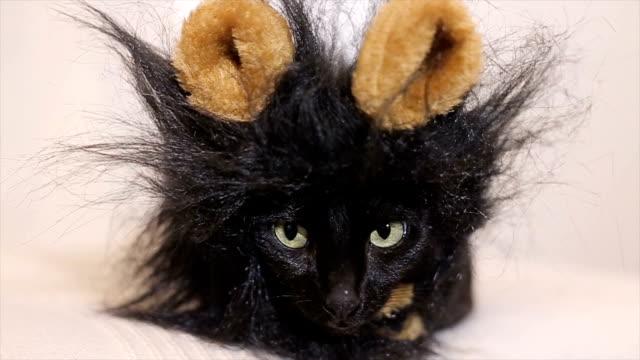 Sehr, sehr lustige Katze, Porträt, Nahaufnahme
