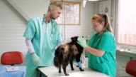 Vet giving dog anesthetic