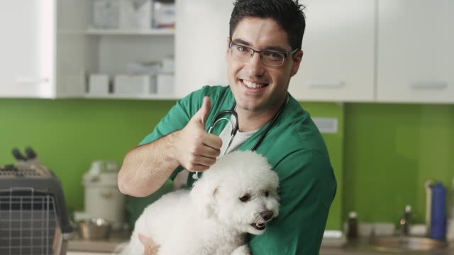 Veterinarian Examining A Little Dog And Shoving Thumbs Up