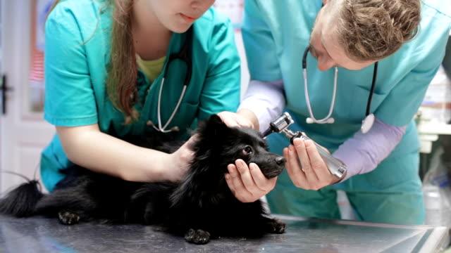 Veterinär undersöka hunden med otoskop
