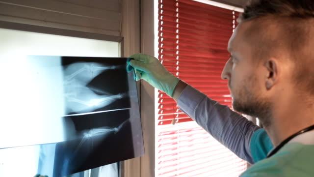 Veterinarian examining dog's x-ray image